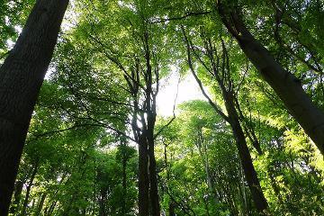 Sunlight in woods